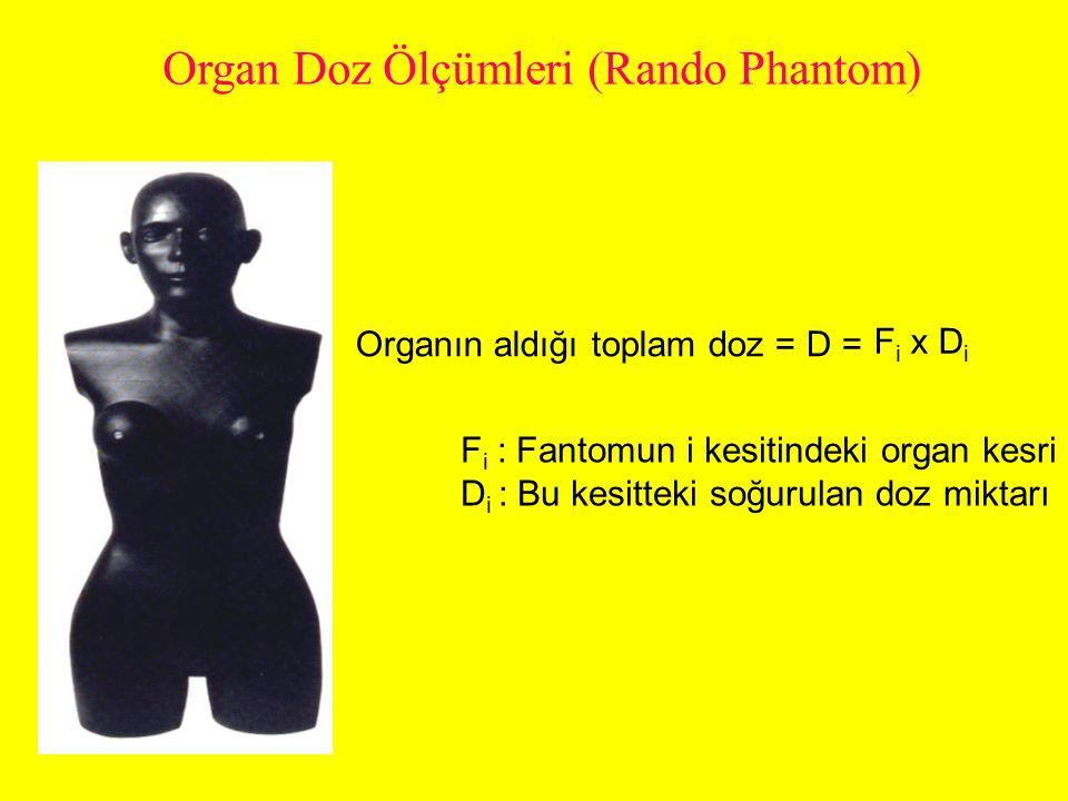 Organ Doz Ölçümleri (Rando Phantom)