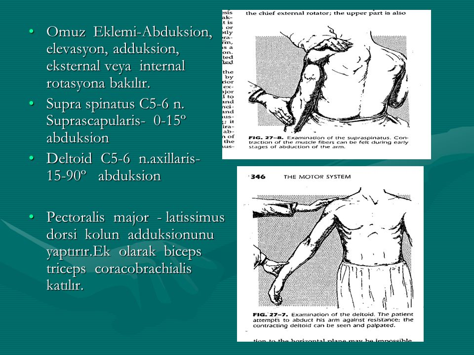 Omuz Eklemi-Abduksion, elevasyon, adduksion, eksternal veya internal rotasyona bakılır.