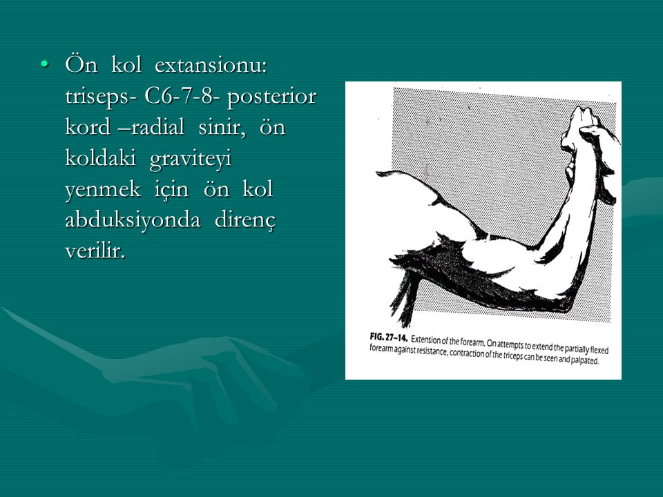 Ön kol extansionu: triseps- C6-7-8- posterior kord –radial sinir, ön koldaki graviteyi yenmek için ön kol abduksiyonda direnç verilir.