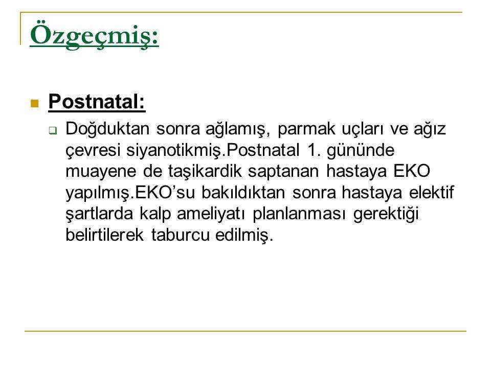 Özgeçmiş: Postnatal: