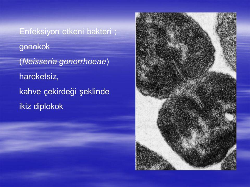 Enfeksiyon etkeni bakteri ;