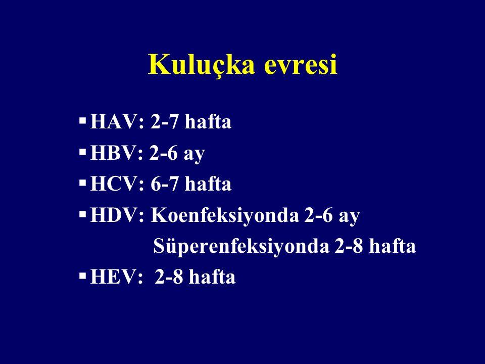 Kuluçka evresi HAV: 2-7 hafta HBV: 2-6 ay HCV: 6-7 hafta