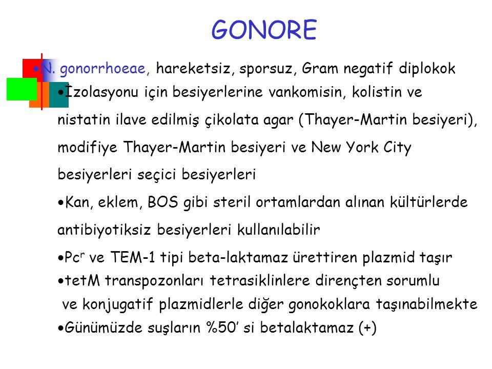 GONORE N. gonorrhoeae, hareketsiz, sporsuz, Gram negatif diplokok