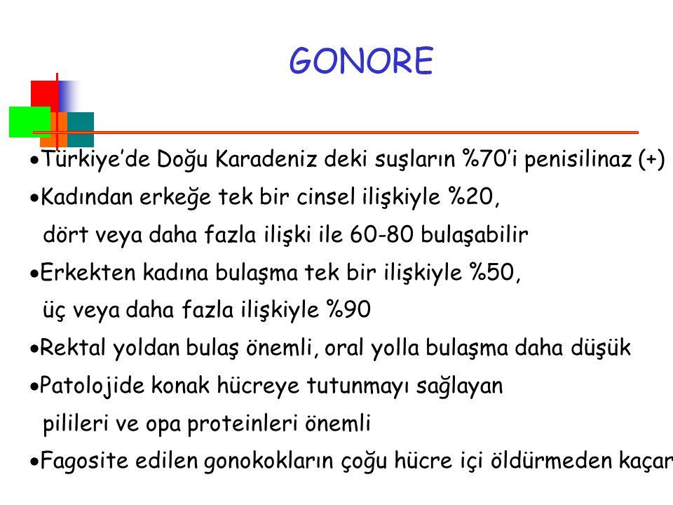GONORE Türkiye'de Doğu Karadeniz deki suşların %70'i penisilinaz (+)