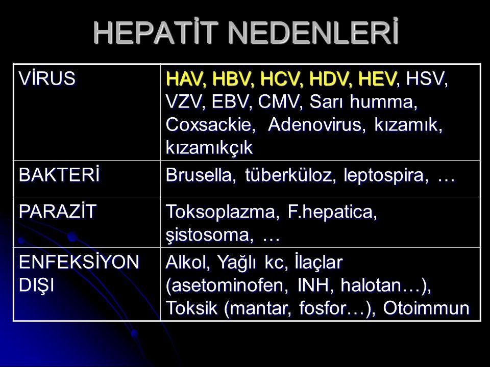 HEPATİT NEDENLERİ VİRUS