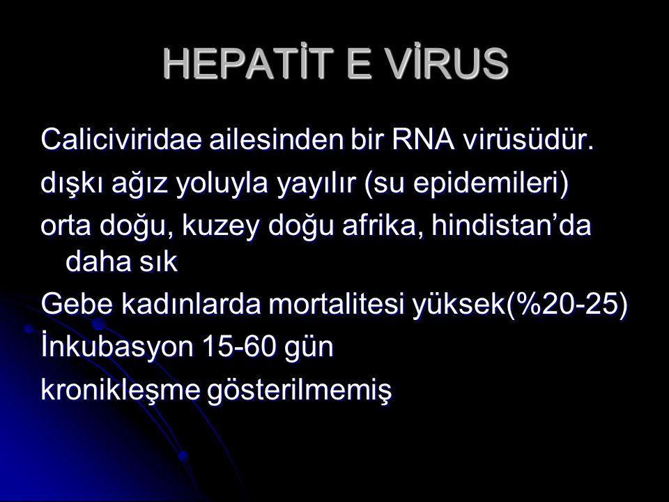 HEPATİT E VİRUS Caliciviridae ailesinden bir RNA virüsüdür.
