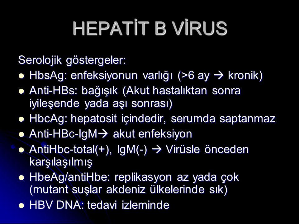 HEPATİT B VİRUS Serolojik göstergeler: