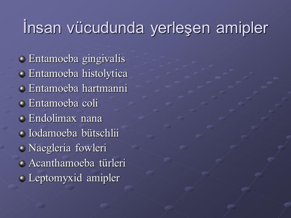 İnsan vücudunda yerleşen amipler