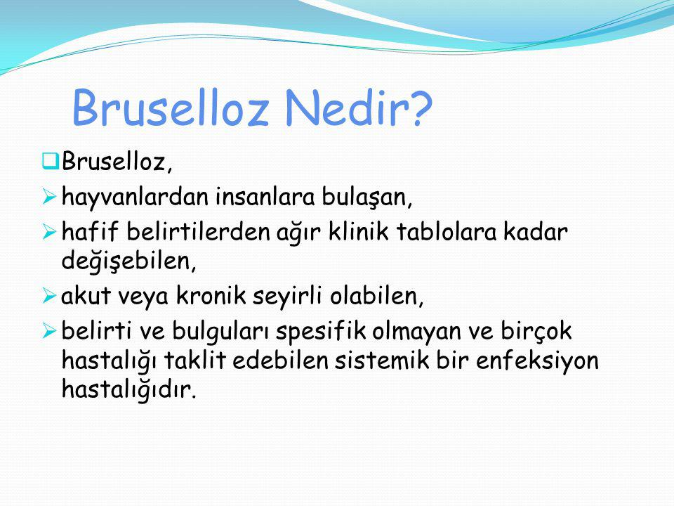 Bruselloz Nedir Bruselloz, hayvanlardan insanlara bulaşan,