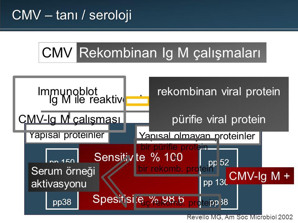 rekombinan viral protein pürifie viral protein