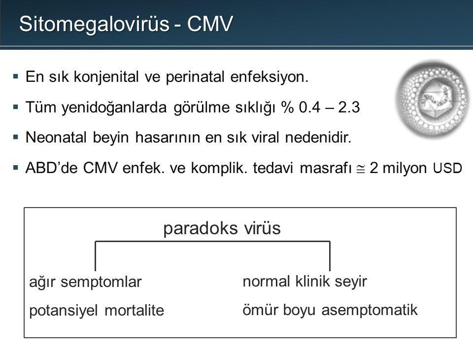 Sitomegalovirüs - CMV paradoks virüs