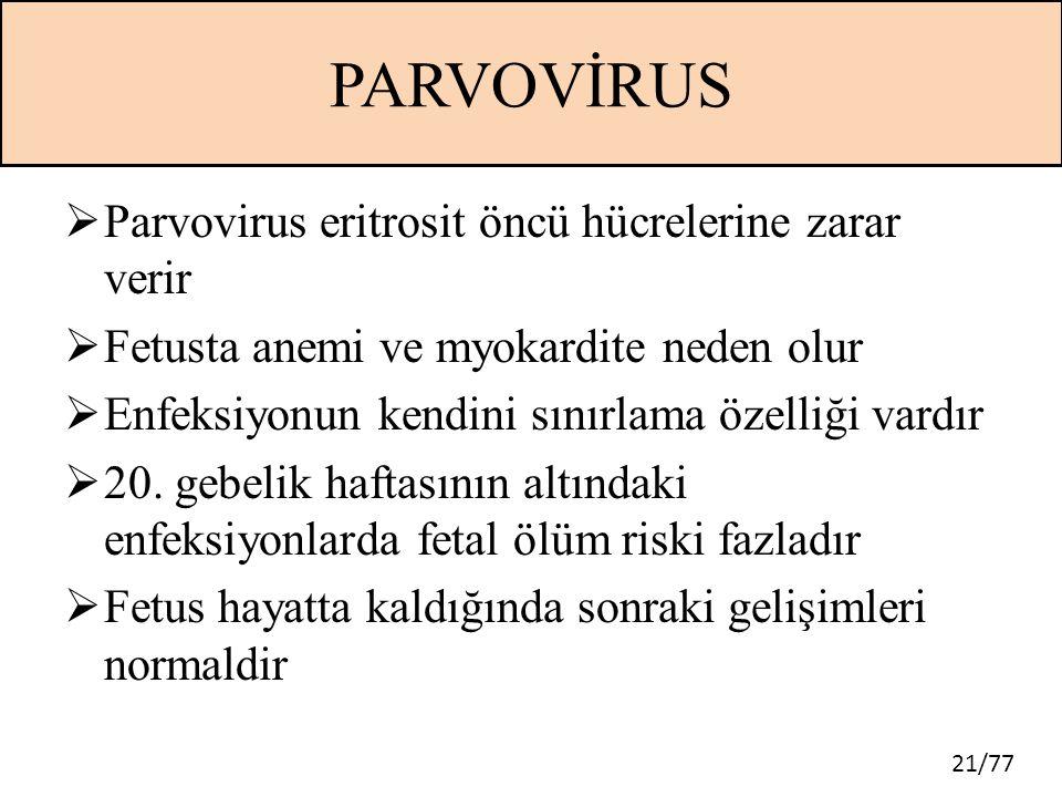 PARVOVİRUS Parvovirus eritrosit öncü hücrelerine zarar verir