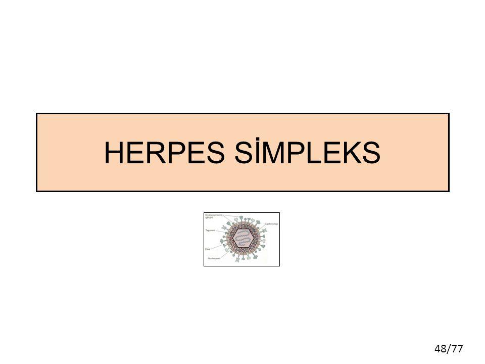 HERPES SİMPLEKS