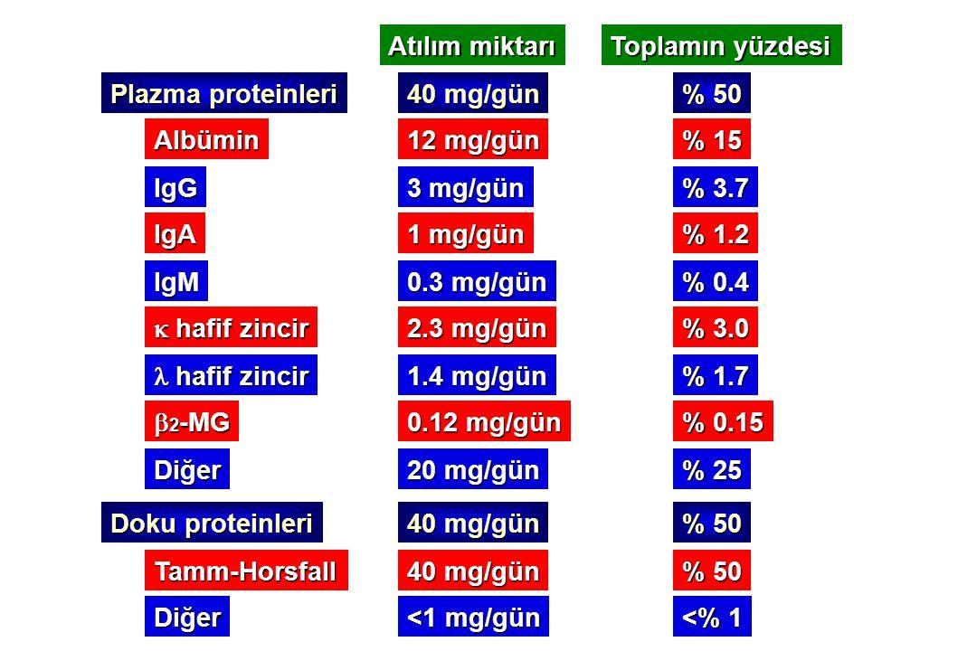 Atılım miktarı Toplamın yüzdesi. Plazma proteinleri. 40 mg/gün. % 50. Albümin. 12 mg/gün. % 15.