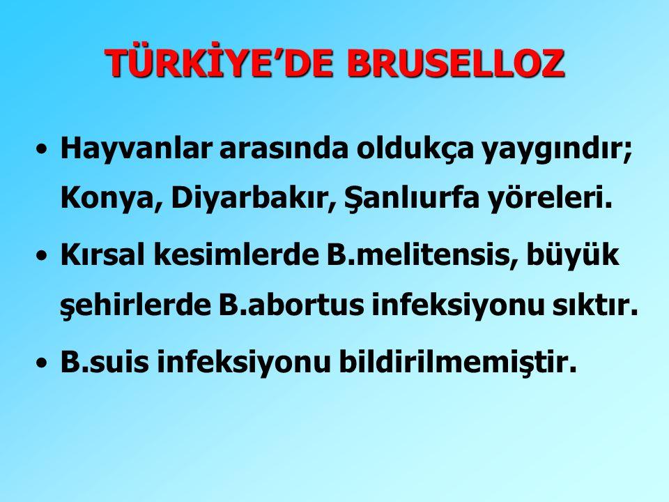 TÜRKİYE'DE BRUSELLOZ Hayvanlar arasında oldukça yaygındır; Konya, Diyarbakır, Şanlıurfa yöreleri.