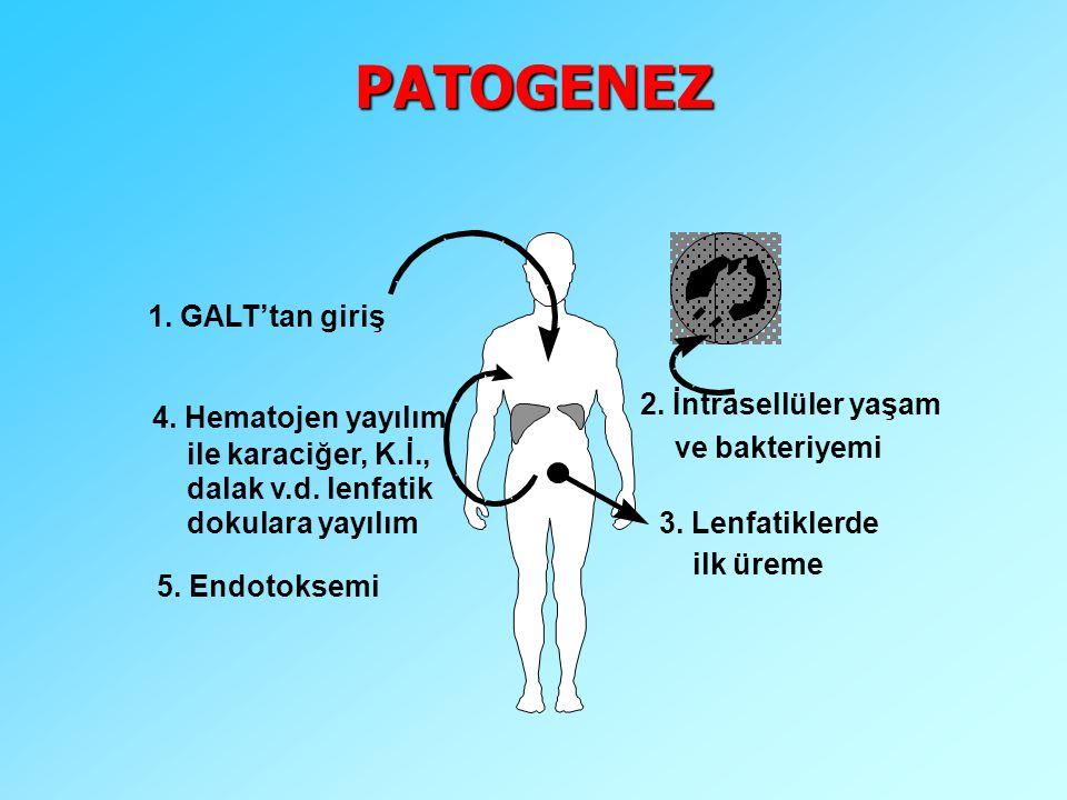 PATOGENEZ 1. GALT'tan giriş 2. İntrasellüler yaşam 4. Hematojen