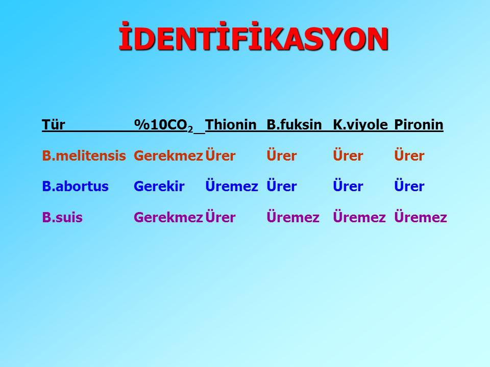 İDENTİFİKASYON Tür %10CO2 Thionin B.fuksin K.viyole Pironin