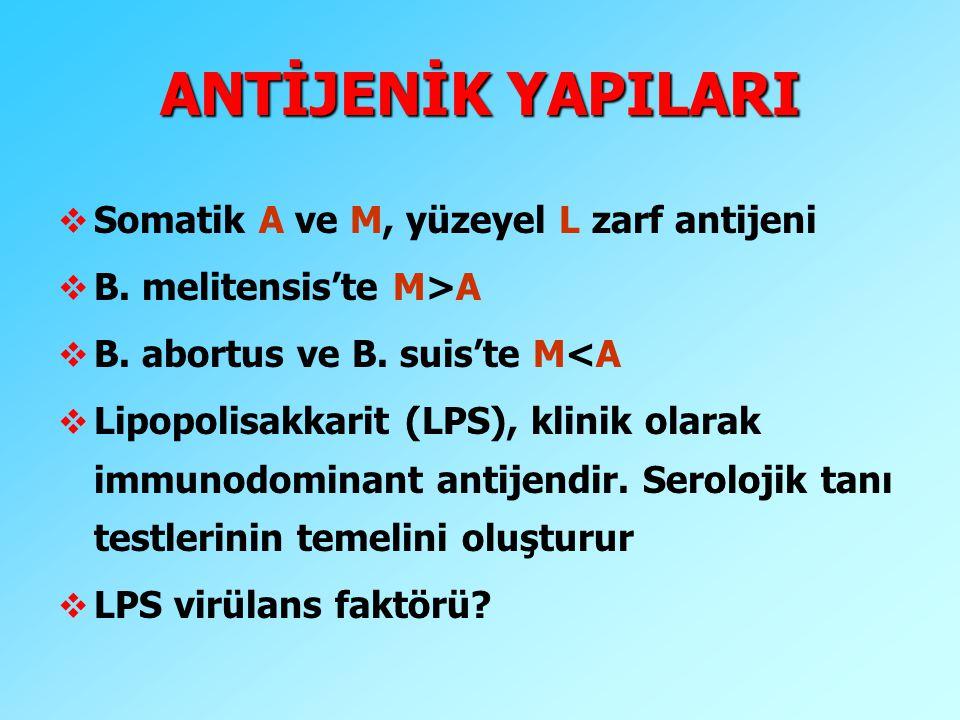ANTİJENİK YAPILARI Somatik A ve M, yüzeyel L zarf antijeni