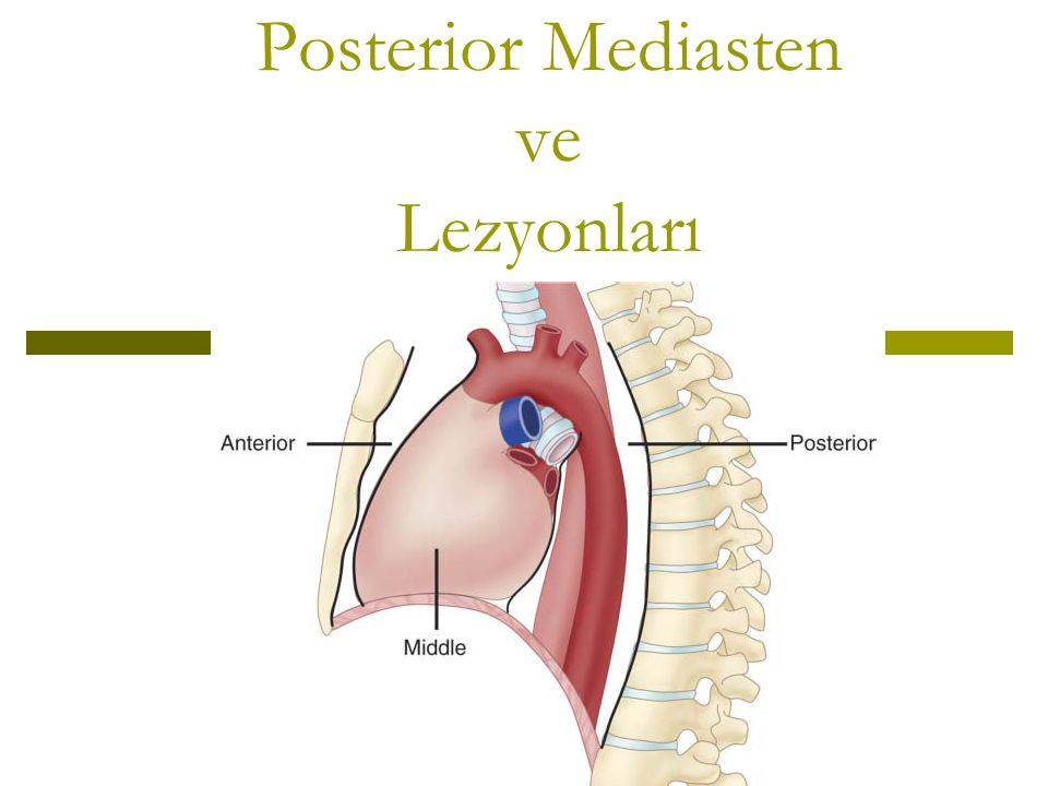 Posterior Mediasten ve Lezyonları