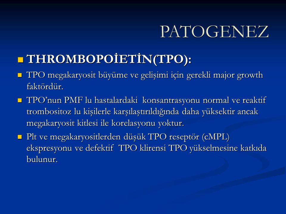 PATOGENEZ THROMBOPOİETİN(TPO):