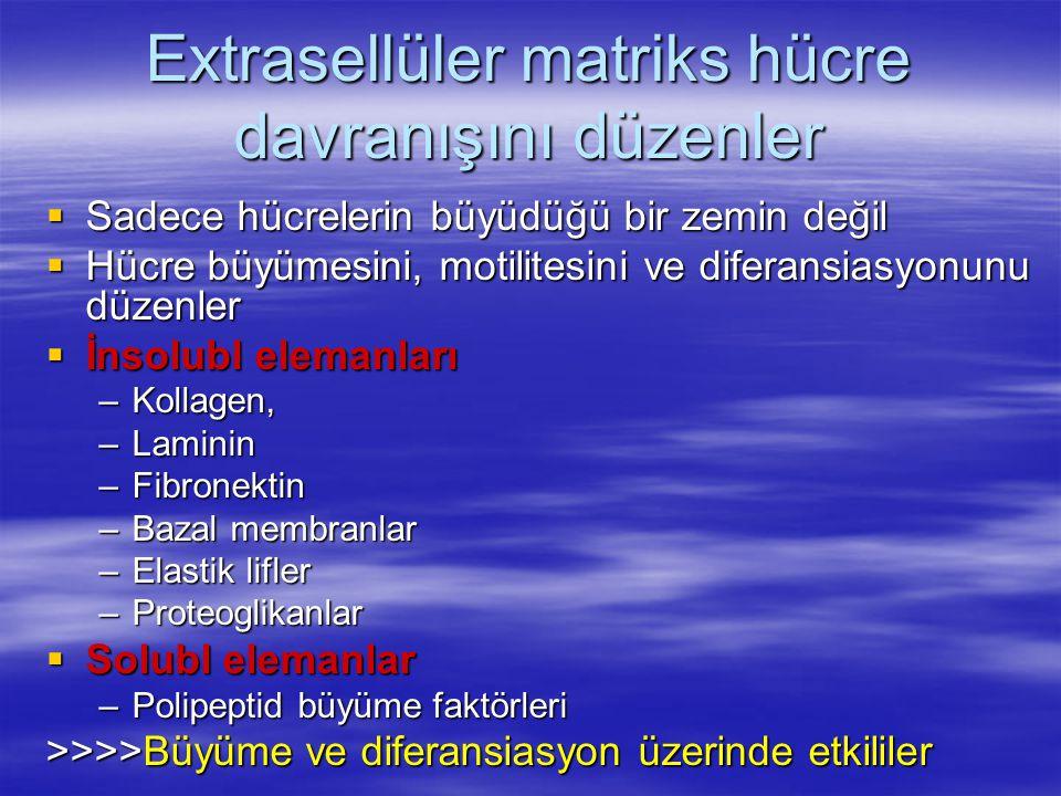 Extrasellüler matriks hücre davranışını düzenler