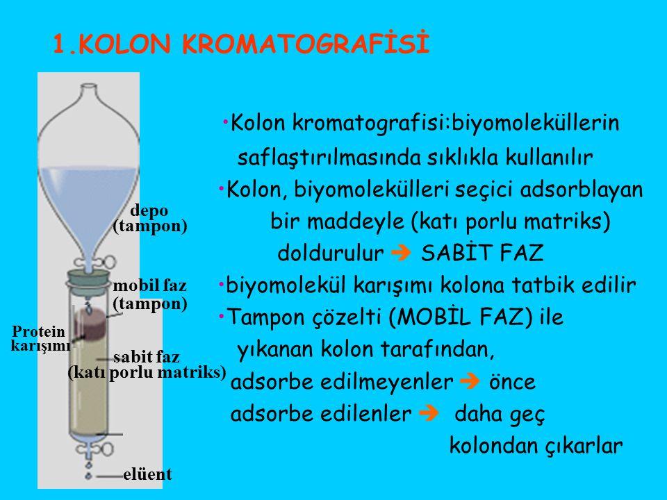 •Kolon kromatografisi:biyomoleküllerin