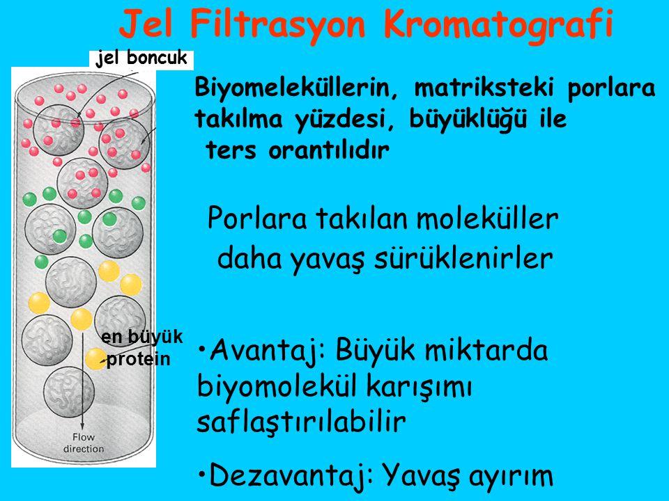 Jel Filtrasyon Kromatografi
