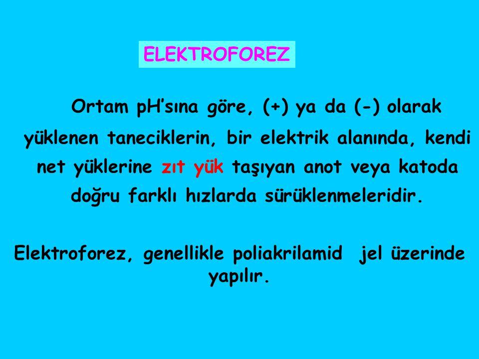 Elektroforez, genellikle poliakrilamid jel üzerinde yapılır.