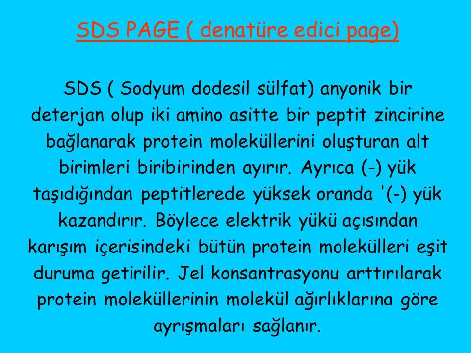 SDS PAGE ( denatüre edici page)