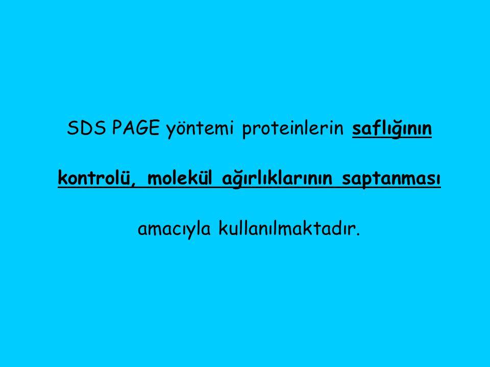 SDS PAGE yöntemi proteinlerin saflığının kontrolü, molekül ağırlıklarının saptanması amacıyla kullanılmaktadır.