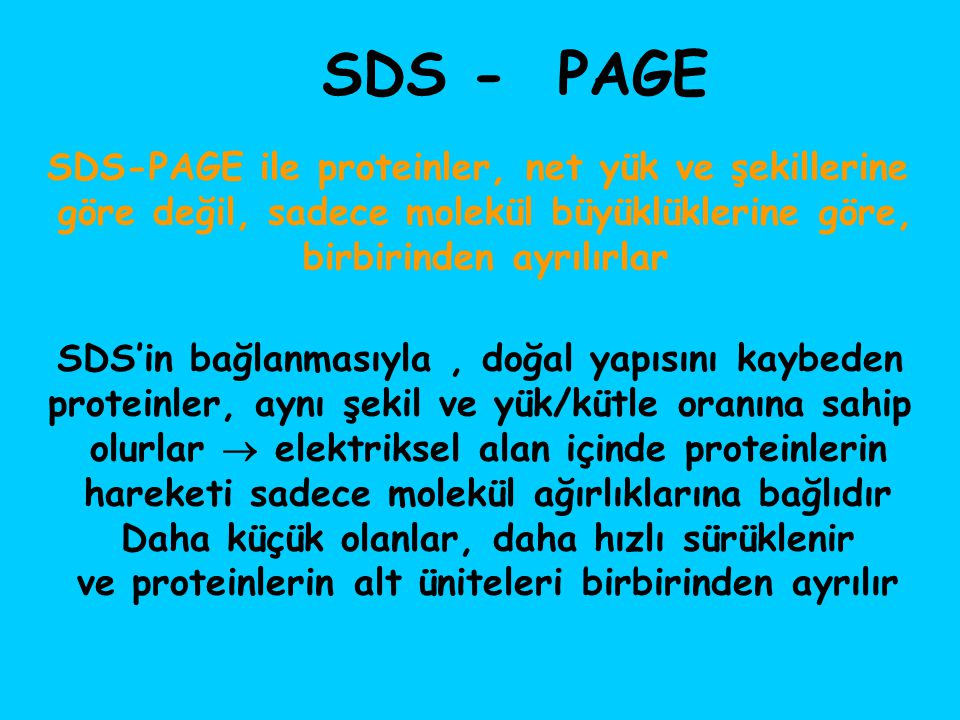 SDS - PAGE SDS-PAGE ile proteinler, net yük ve şekillerine