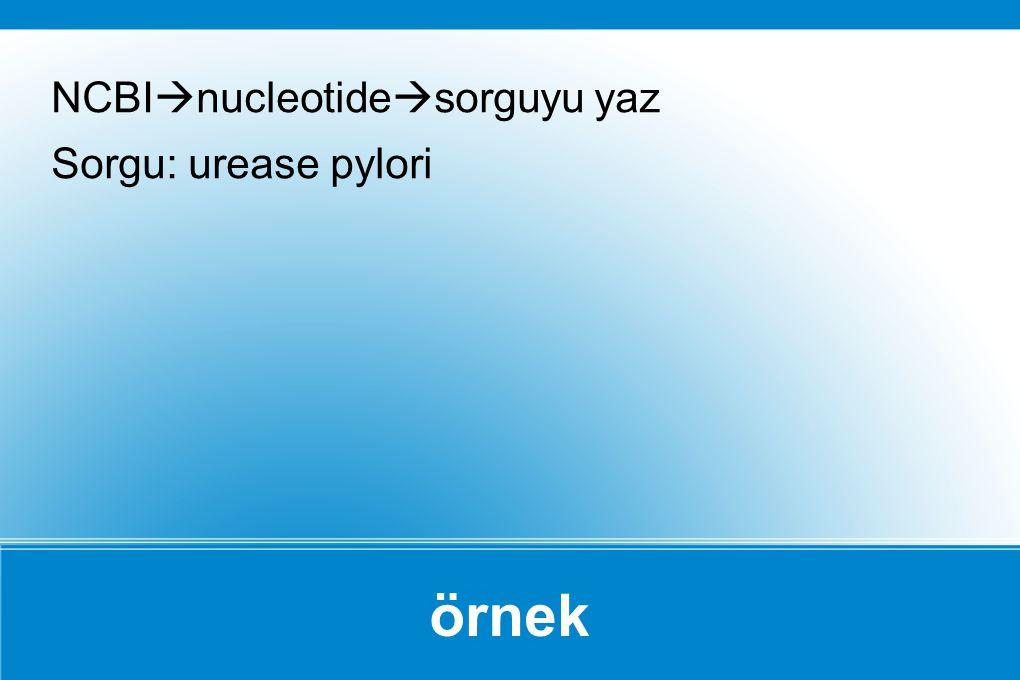 NCBInucleotidesorguyu yaz Sorgu: urease pylori