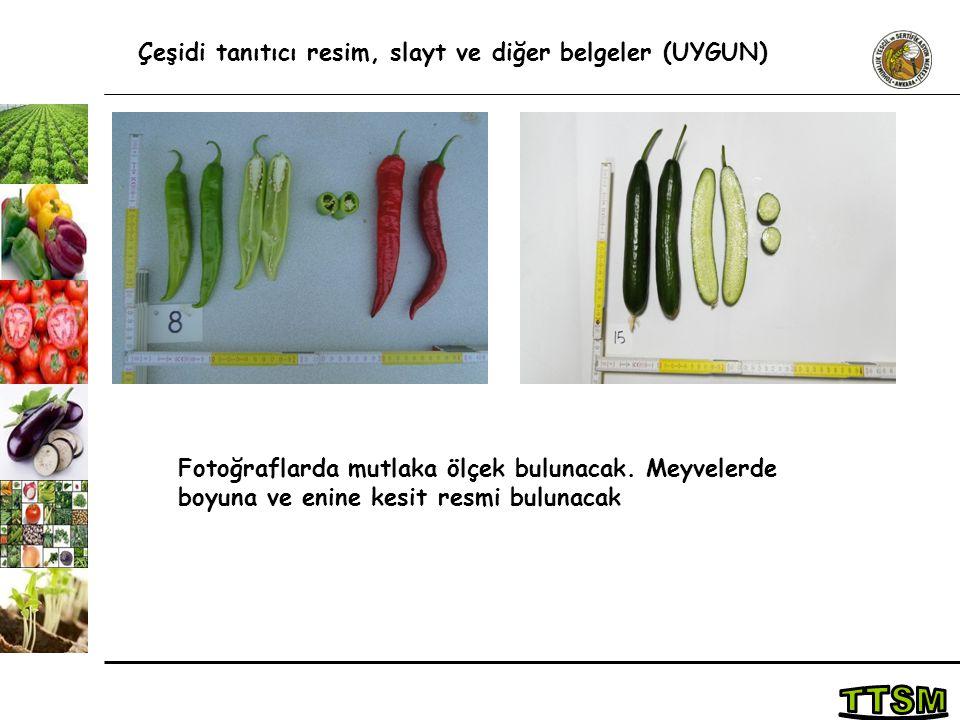 TTSM Çeşidi tanıtıcı resim, slayt ve diğer belgeler (UYGUN)