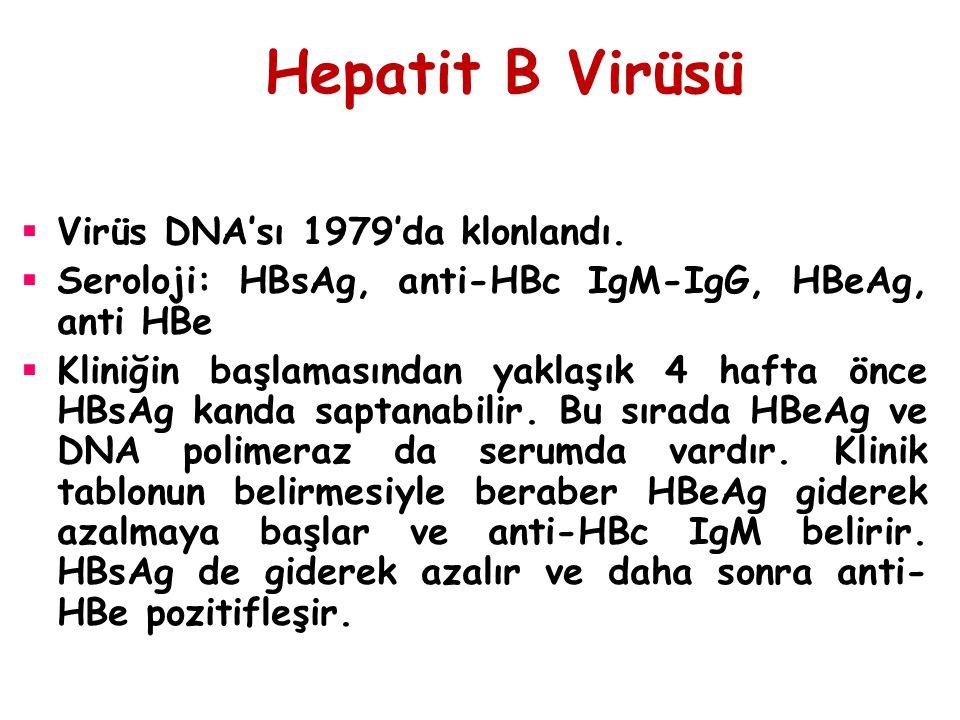 Hepatit B Virüsü Virüs DNA'sı 1979'da klonlandı.