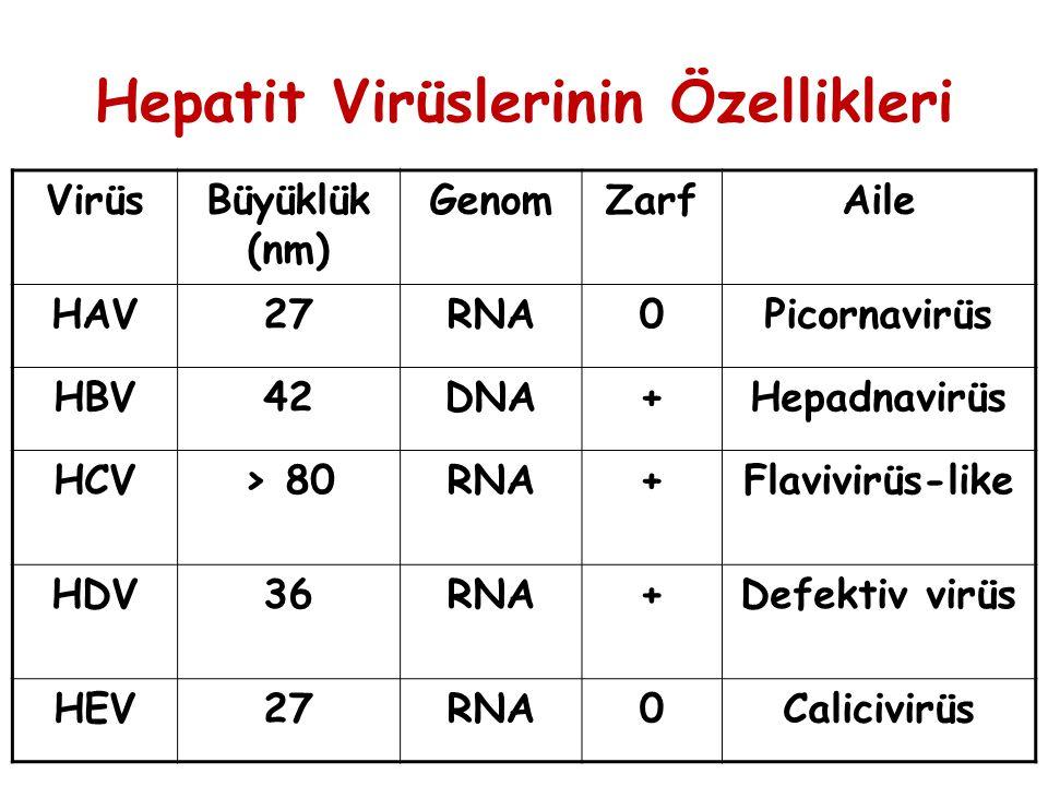 Hepatit Virüslerinin Özellikleri