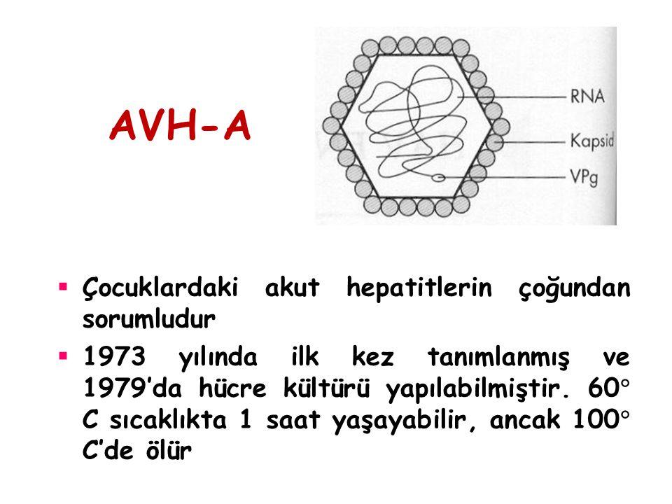 AVH-A Çocuklardaki akut hepatitlerin çoğundan sorumludur