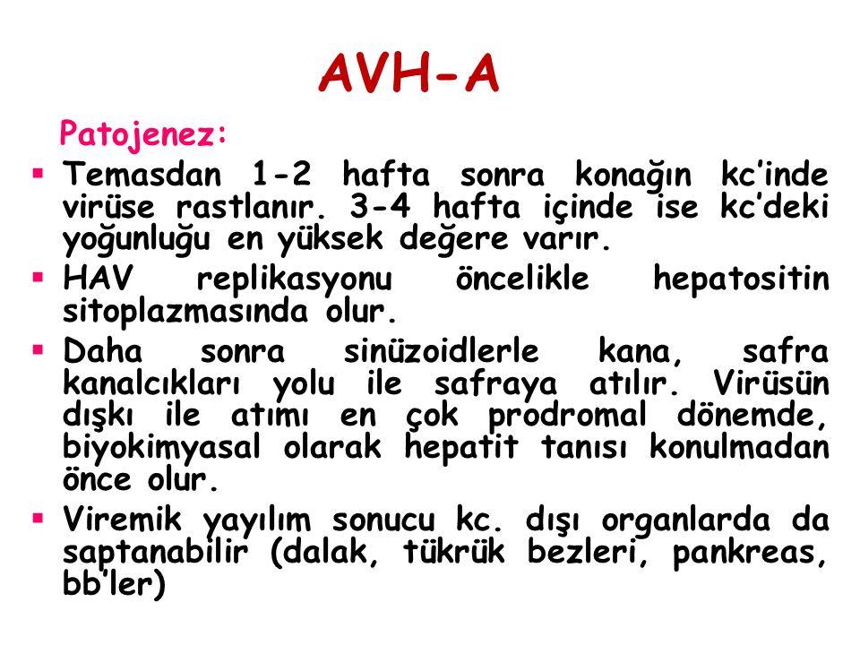 AVH-A Patojenez: Temasdan 1-2 hafta sonra konağın kc'inde virüse rastlanır. 3-4 hafta içinde ise kc'deki yoğunluğu en yüksek değere varır.