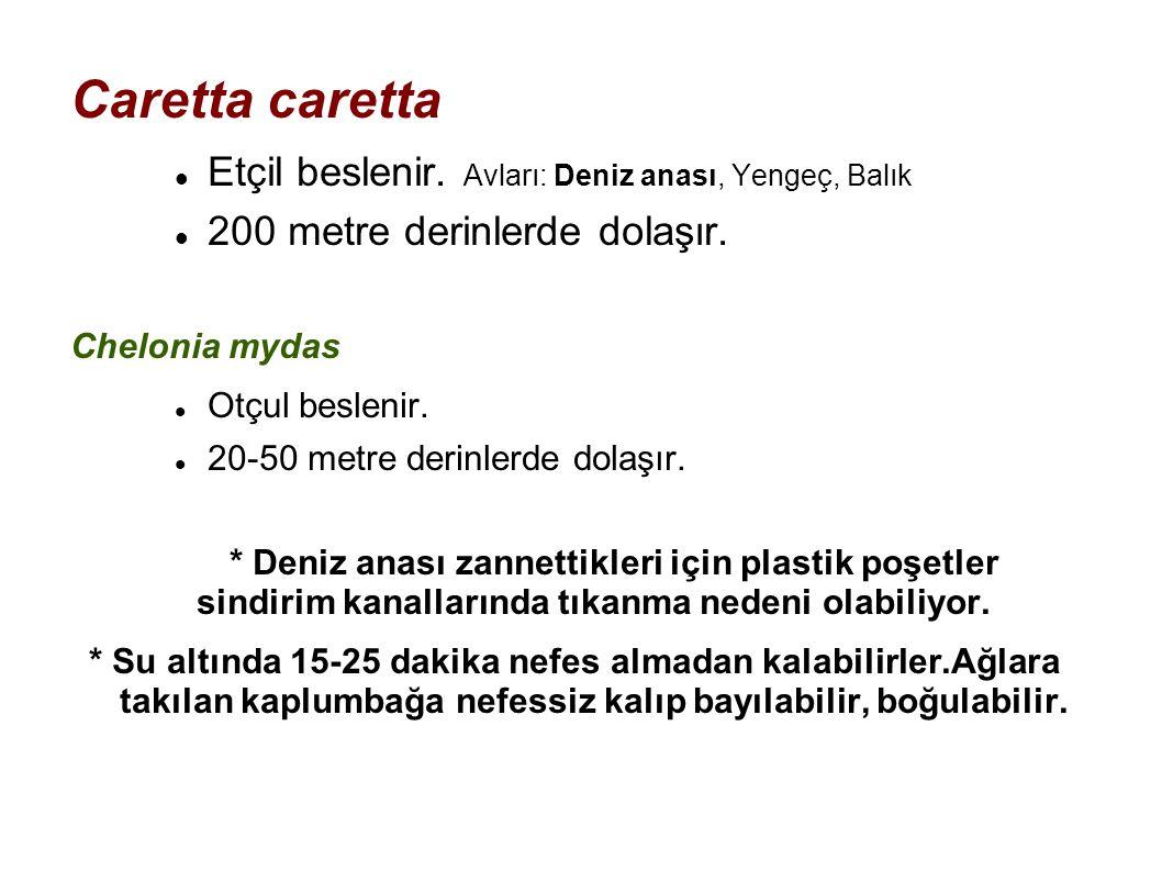 Caretta caretta Etçil beslenir. Avları: Deniz anası, Yengeç, Balık