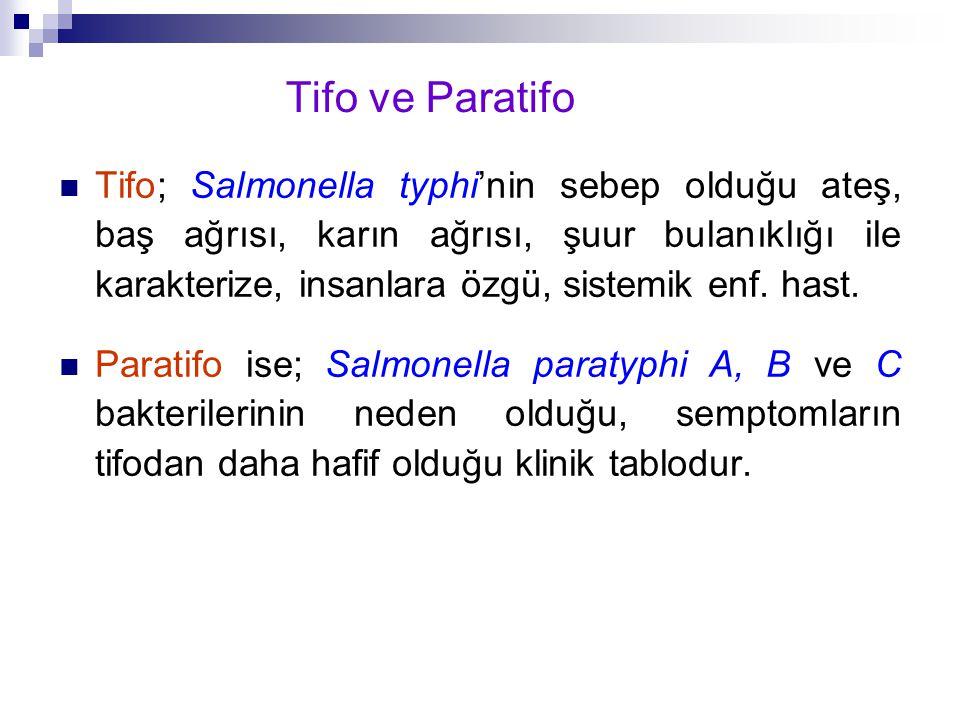 Tifo ve Paratifo
