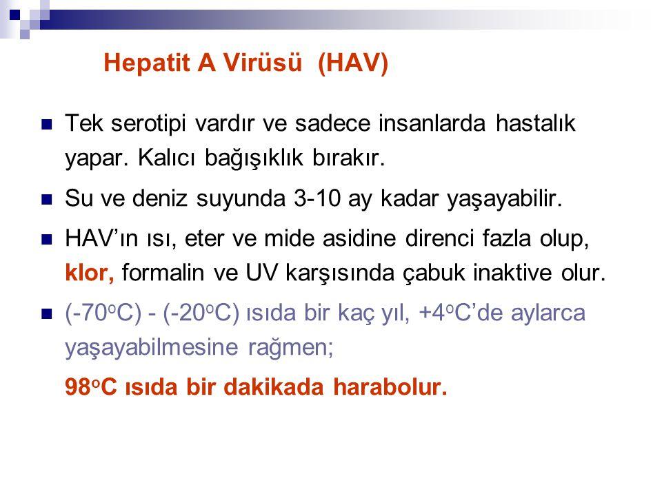 Hepatit A Virüsü (HAV) Tek serotipi vardır ve sadece insanlarda hastalık yapar. Kalıcı bağışıklık bırakır.