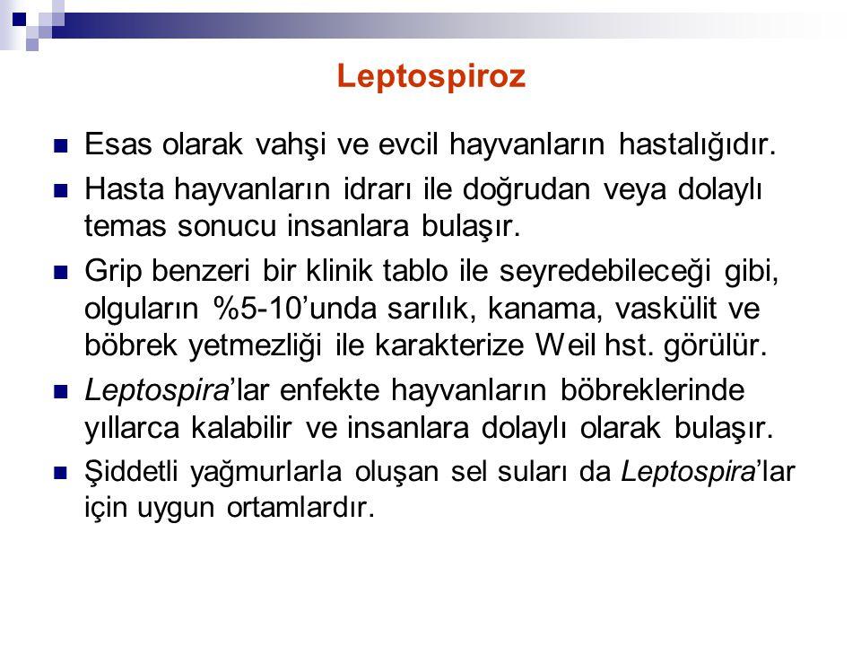 Leptospiroz Esas olarak vahşi ve evcil hayvanların hastalığıdır.