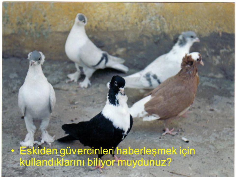 Eskiden güvercinleri haberleşmek için kullandıklarını biliyor muydunuz