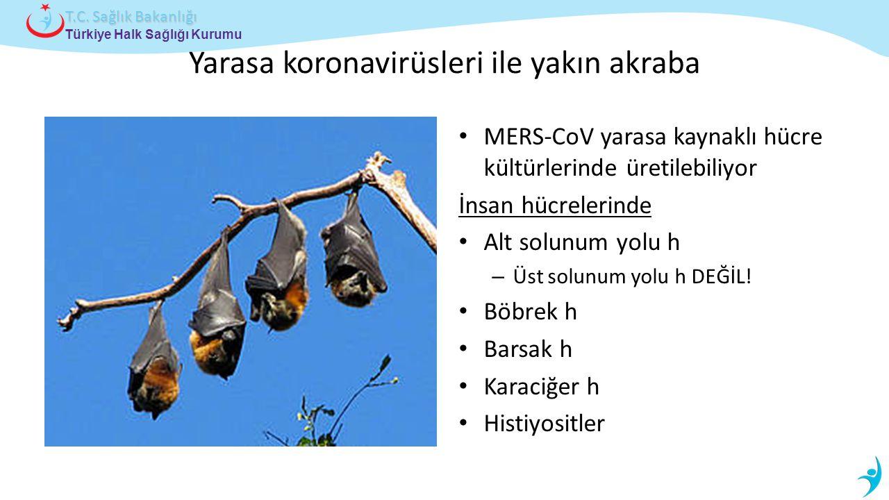 Yarasa koronavirüsleri ile yakın akraba