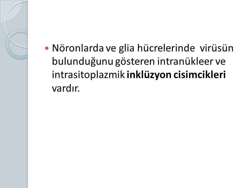 Nöronlarda ve glia hücrelerinde virüsün bulunduğunu gösteren intranükleer ve intrasitoplazmik inklüzyon cisimcikleri vardır.