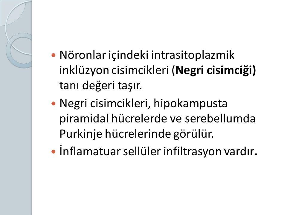 Nöronlar içindeki intrasitoplazmik inklüzyon cisimcikleri (Negri cisimciği) tanı değeri taşır.
