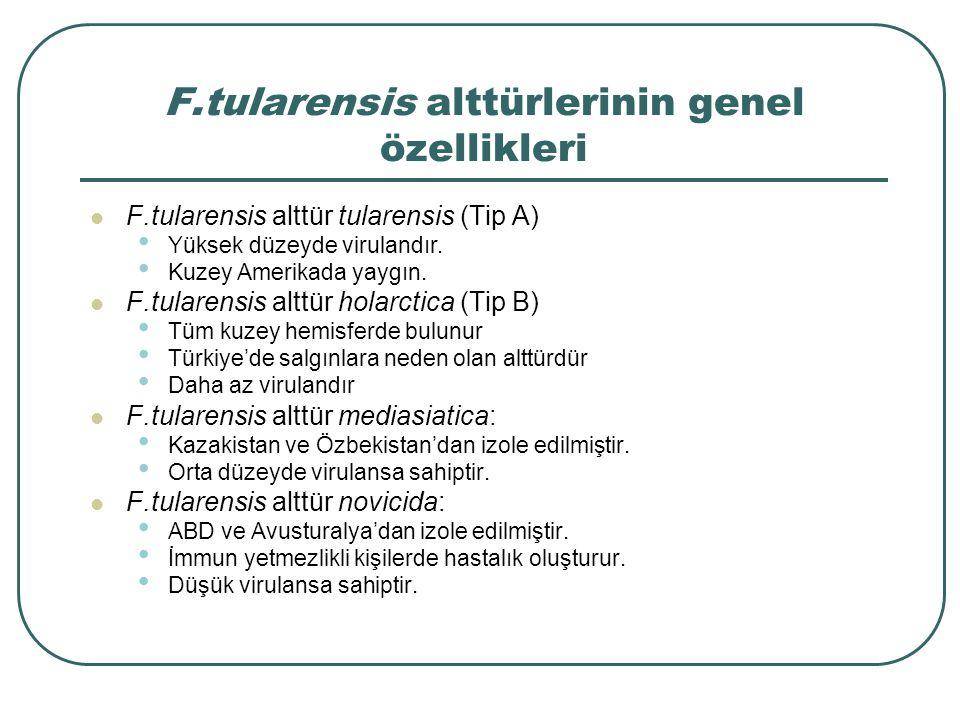 F.tularensis alttürlerinin genel özellikleri