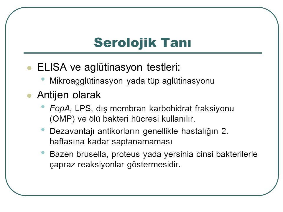 Serolojik Tanı ELISA ve aglütinasyon testleri: Antijen olarak