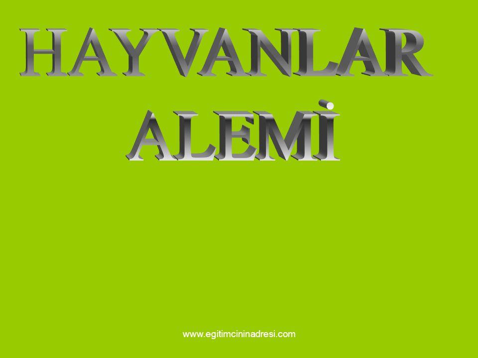 HAYVANLAR ALEMİ www.egitimcininadresi.com