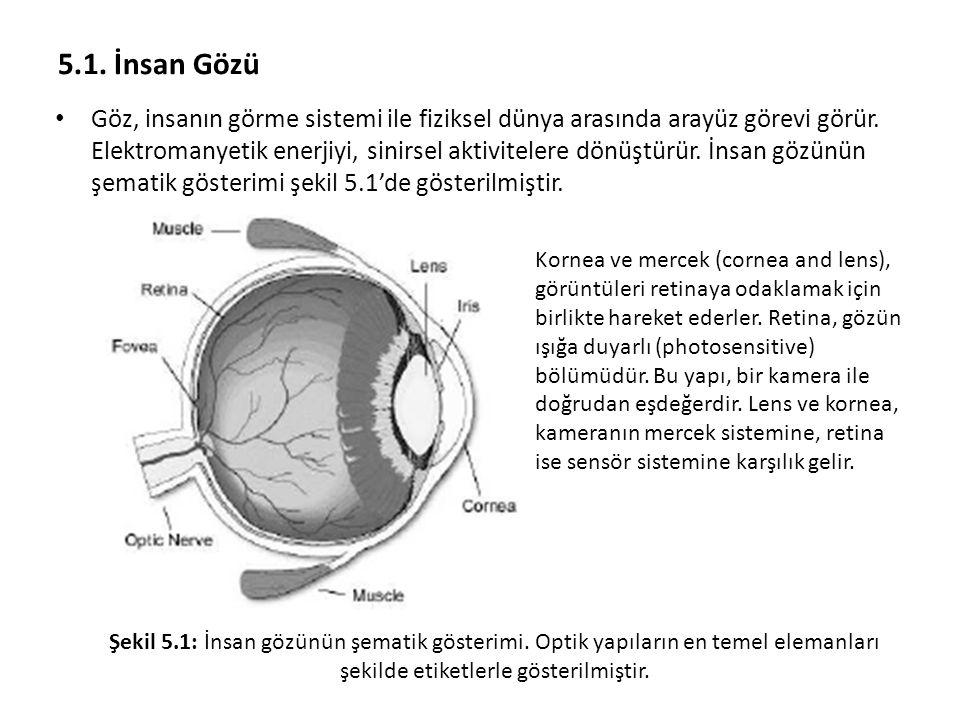 5.1. İnsan Gözü
