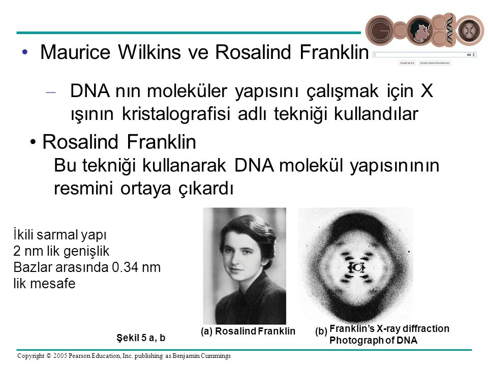 Maurice Wilkins ve Rosalind Franklin